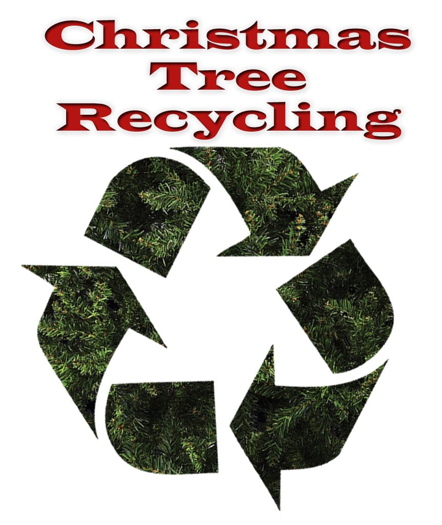 Disposing Of Christmas Trees: County Urges Christmas Tree Recycling